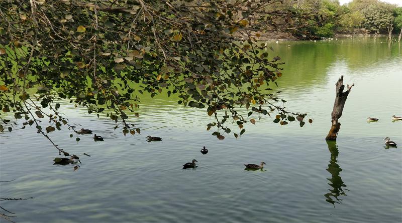 Hauz Khas Lake