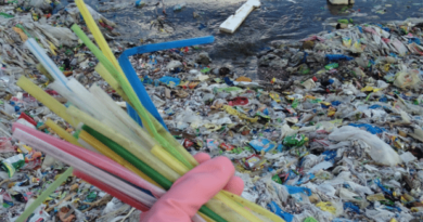 plastic straws pollution