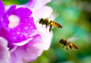 May 20th is World Bee Day from now. Here's why