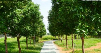 Kahna Trees