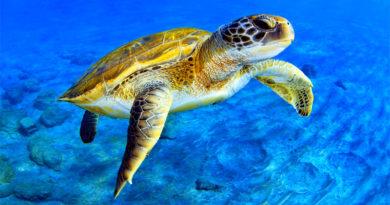 Sea Turtle ocean ecosystem