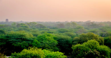 Forest in Delhi
