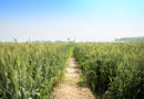 Punjab Looking at Agricultural Land to Provide for Solar PV Projects