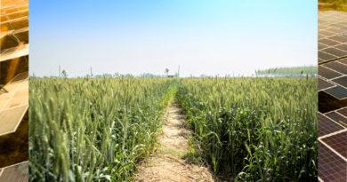 Farming Land in Punjab