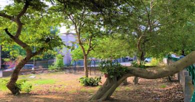 Trees in Delhi
