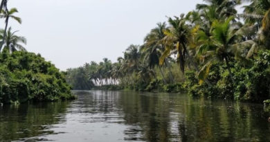 Mangroves in Kerala