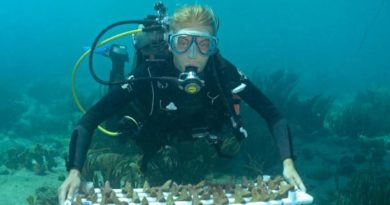 Sowing Corals