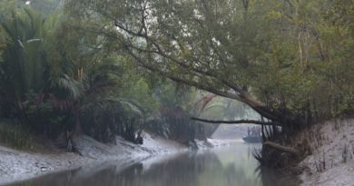The Sunderbans