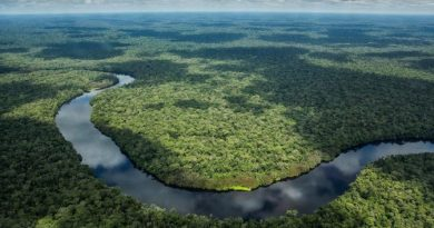 Congo Basin Conservation Brings 6 African Countries Together