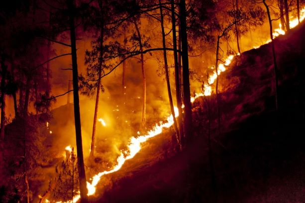 Forest Fire in Shimla, India