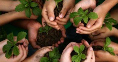 Start a Plantation Drive