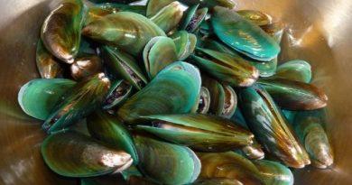Asian green mussels Perna viridis