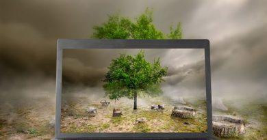 Deforestation monitoring