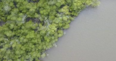 Mangroves Forests needs conservation