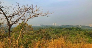 Aarey Forest in Mumbai