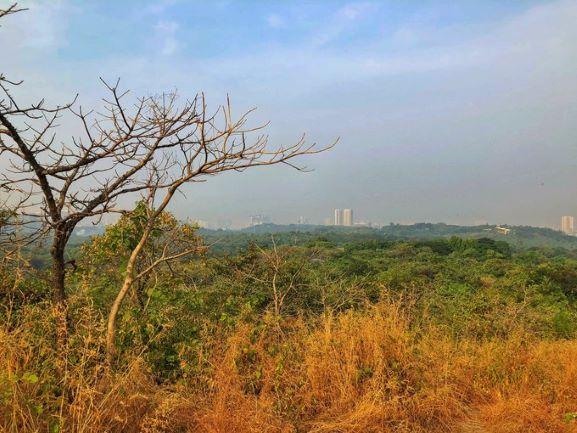 Aarey Forest in Mumbai