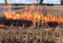 Stubble-Burning in Punjab, Haryana