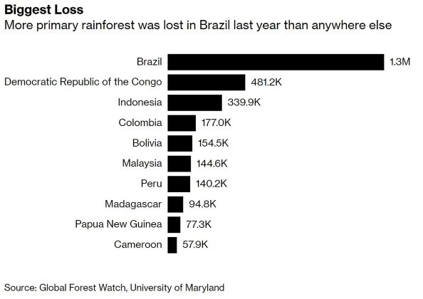 Rain forests lost in 2018