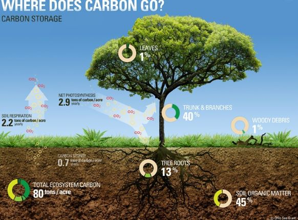 Carbon Storage by trees