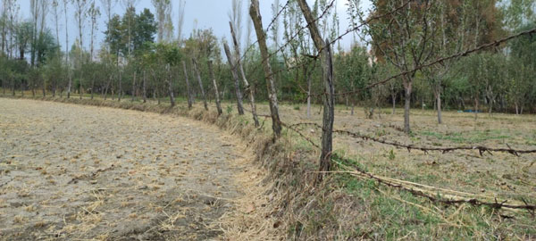 A-Barbed-wire-Separates-Paddy-Field-From-an-Orchard