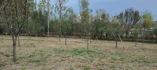 A-Paddy-Field-converted-into-an-Orchard