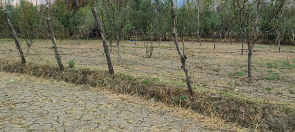 A-barbed-wire-separates-an-orchard-from-a-paddy-field