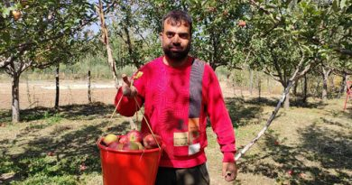A local labourer in an Apple orchard in south-Kashmir with bucket of Apples Pic Credit: Rayies Altaf