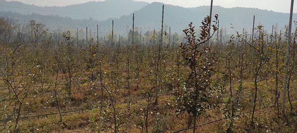 A-new-trend-has-taken-off-in-south-Kashmir