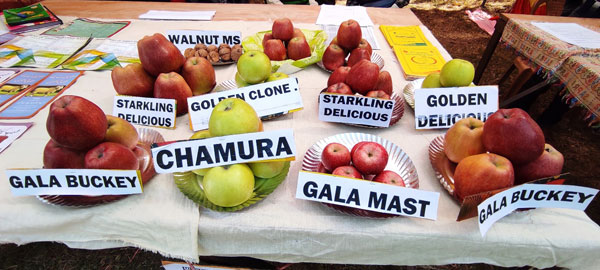 Different-varieties-of-Apples-which-are-grown-in-South-kashmir