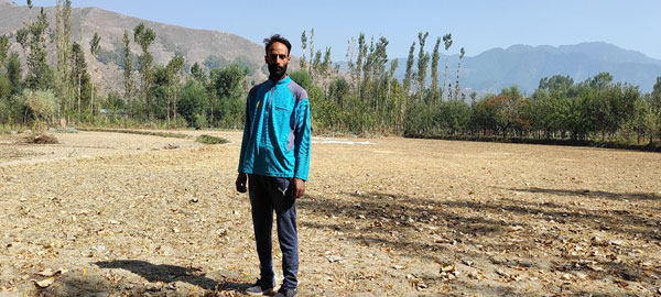 Fayaz-Mir's-Orchard-is-surrounded-by-Paddy-Fields.-He-is-seen-in-one-of-those-paddy-fields-which-surround-his-orchard